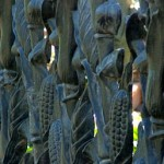 The Banning Museum - Cornstalk Fence